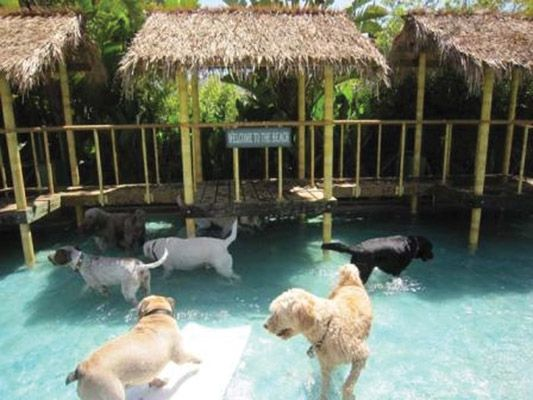 If Doggie Heaven Exists This Is What It Looks Like 7 Pics Did We Mention Pools Yet Pet Resort Dog Daycare Dog Hotel