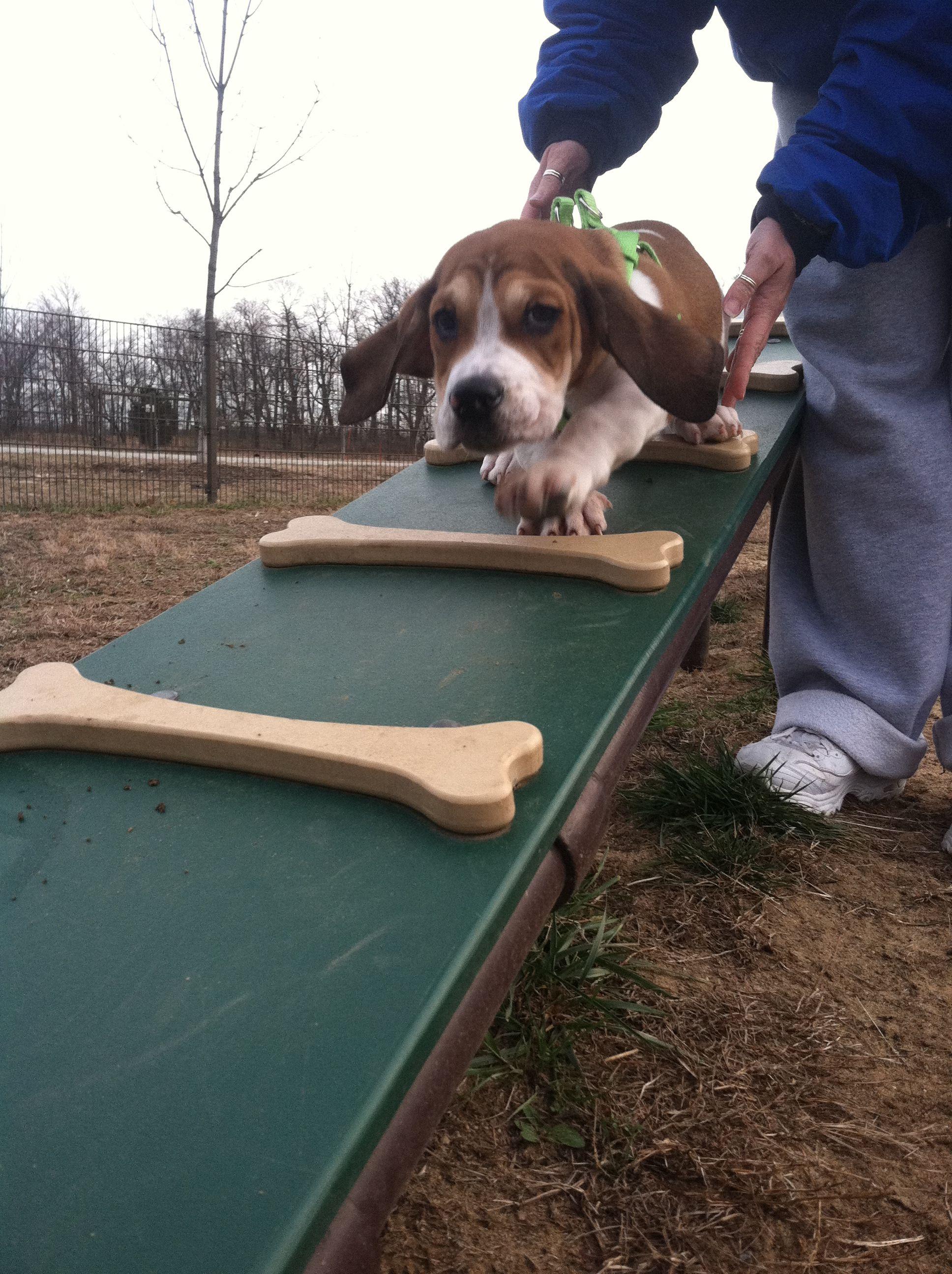 Cat Behavior Dog Park Design Dog Playground Indoor Dog Park