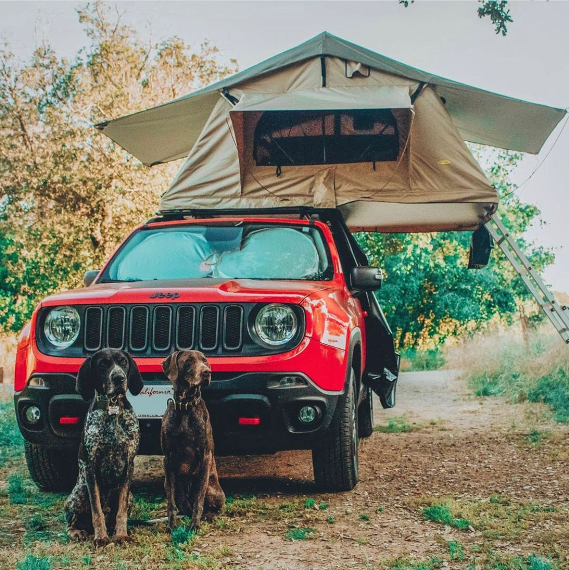 Jeep Renegade With Rooftop Tent And Dogs Jeep Renegade Dream