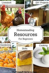 Homesteading resources for beginners Organic gardening DIY projects homestyle  Homesteading resources for beginners Organic gardening DIY projects homestyle