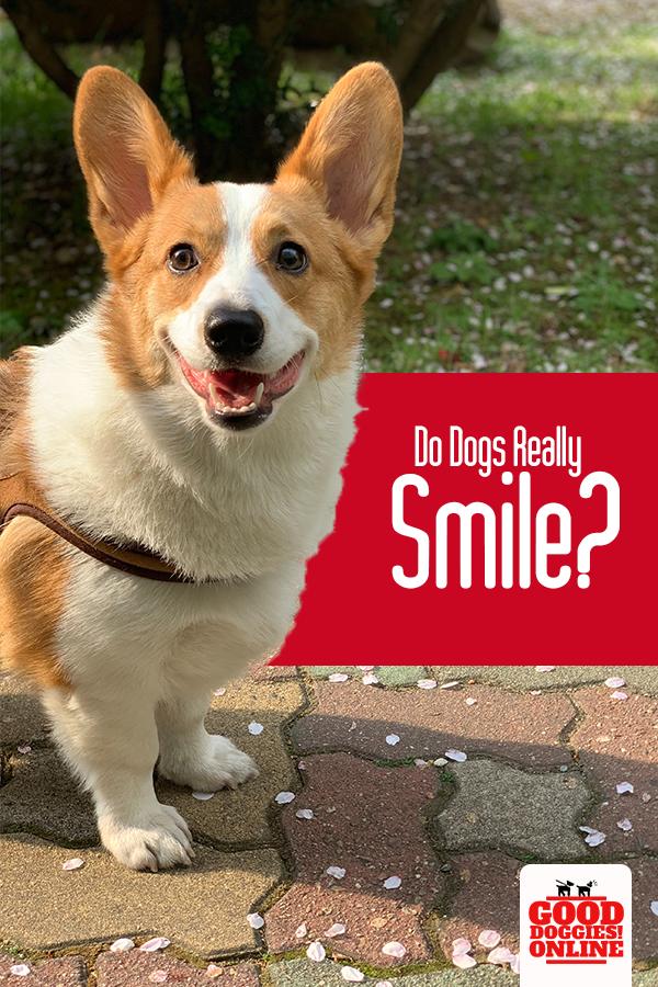Pin on Doggie News
