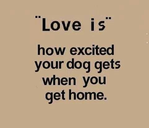 I Love How Happy My Dogs Get When I Get Home What They Don't Know Fascinating I Love My Dog Quotes