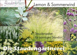 Staudenpaket Lemon Sommerwind Stauden Staudengartnerei Und Sommer