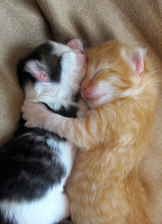 Cute Kittens Hugging Do Not Disturb cat Pinterest