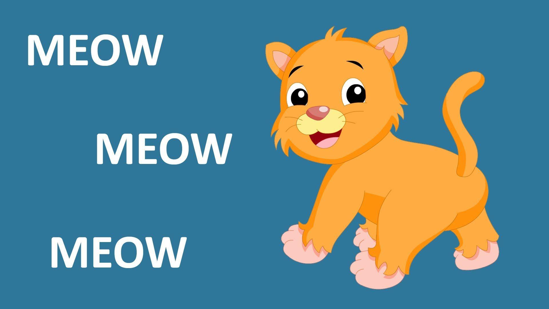 Animals Cartoon Video Songs Download