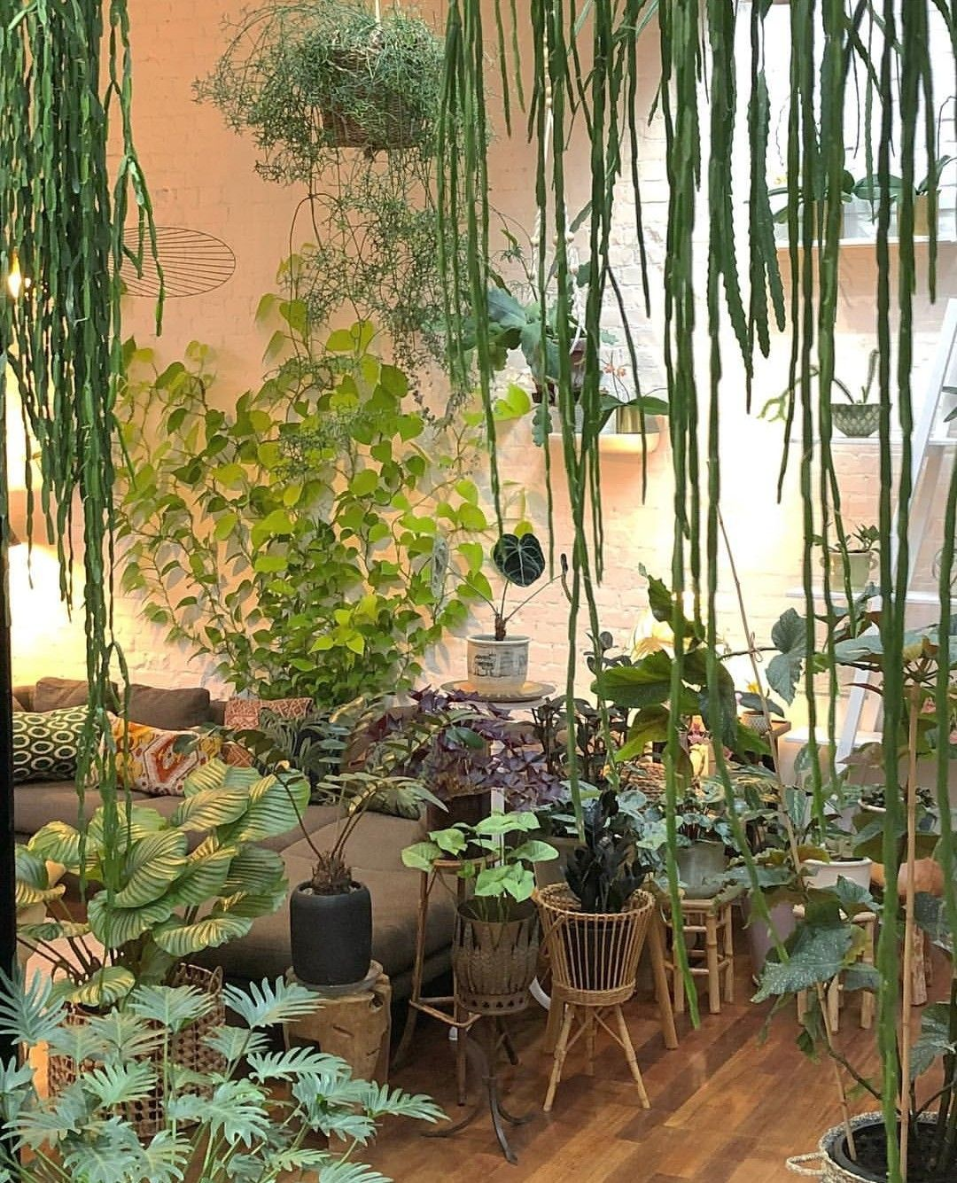 Mur Vegetal Plante Grasse how do i get my living room to look like this? definite