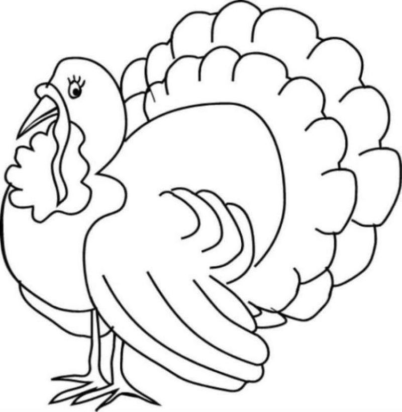 Turkey Coloring Pages This Turkey Or Animal With The Genus