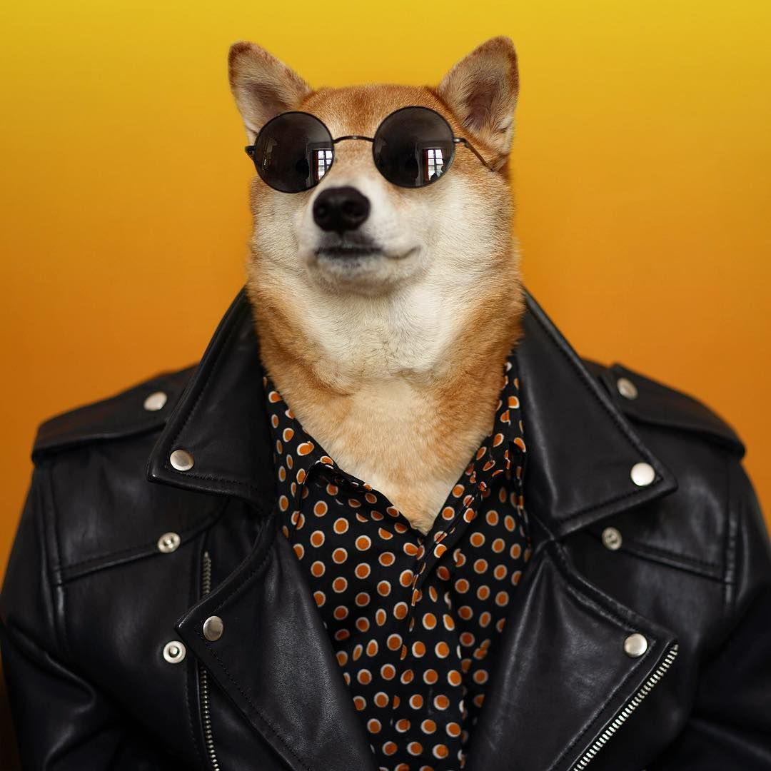 Menweardogs Dog Dog Education Puppy Click On The Link Below To Educate Your Dogs Easily Menswear Dog Stylish Dogs Dog Suit