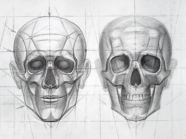 human skull stages of drawing construction detail i