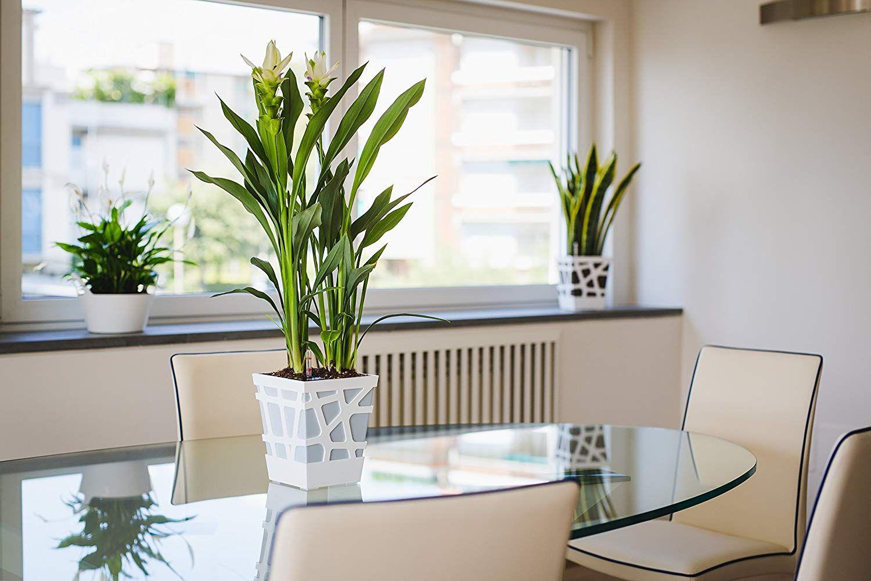 Sharpex Idel Quadro 17 Series Elegant Flower Pot With