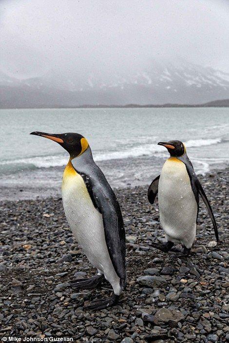 Penguin Snap Together