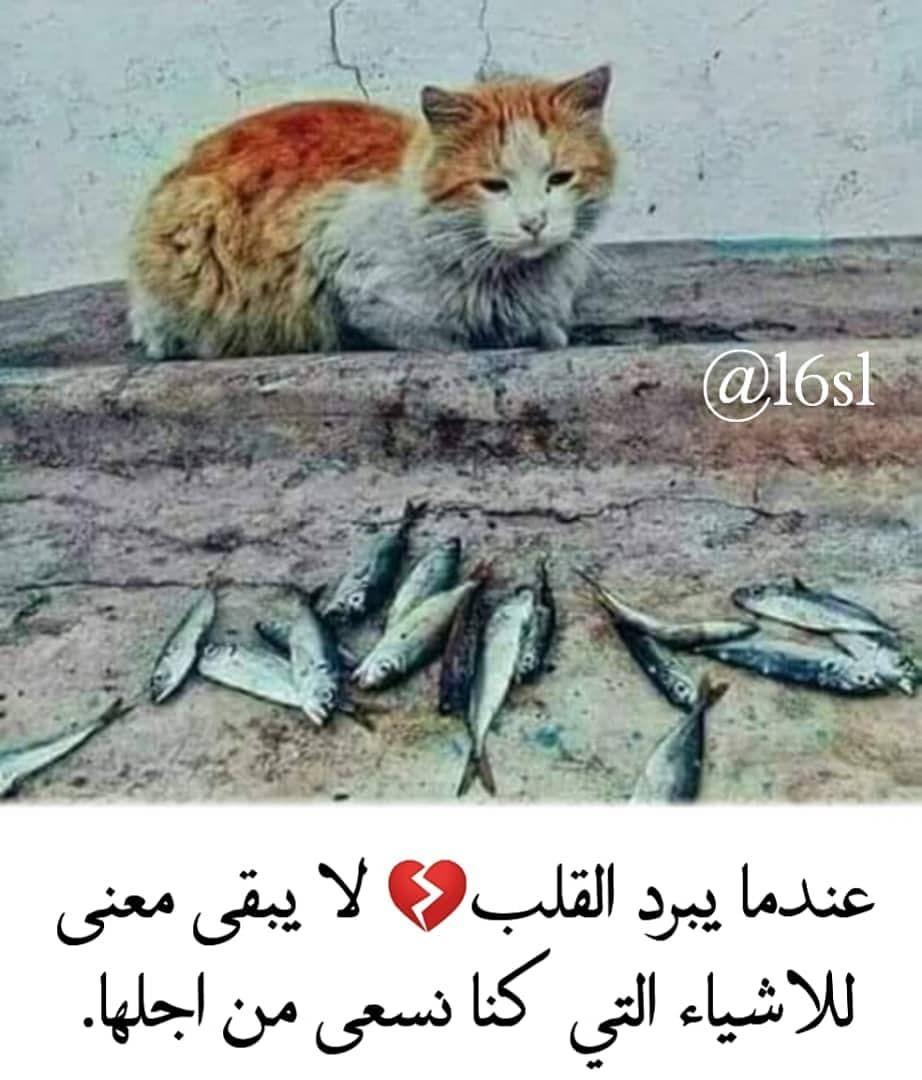 حساب جميل يستحق المتابعة Aiqtibasat Adabia Aiqtibasat Adabia Aiqtibasat Adabia Words Quotes Words Arabic Quotes