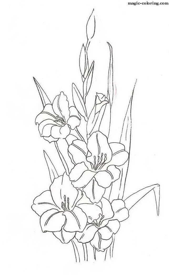 magic coloring gladiolus coloring pages