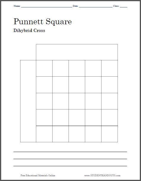 Punnett Square Dihybrid Cross Worksheet Free To Print Pdf File