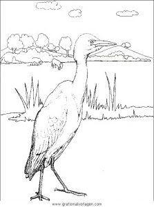 Verschiedene vogel 080 gratis Malvorlage in Tiere Vögel