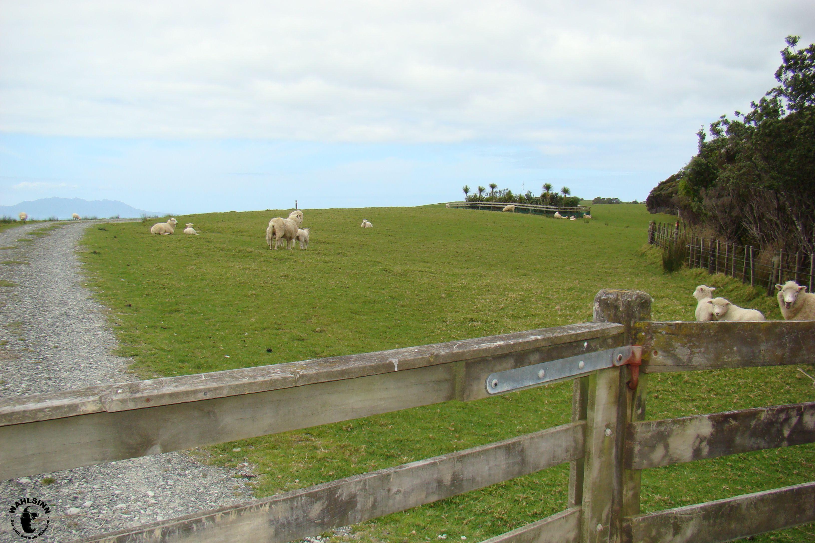 Neuseeland - Tawharnui Regional Park