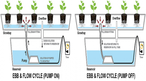 How to Build Flood Drain Hydroponics on Your Own