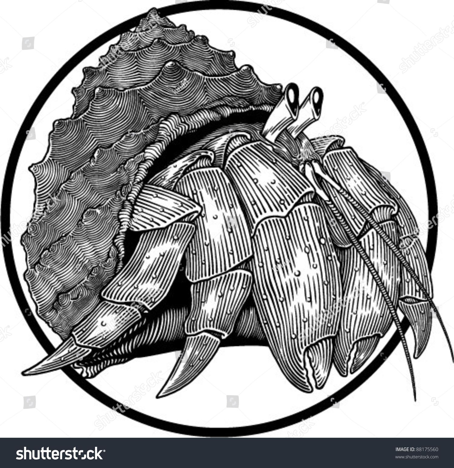 stock-vector-black-and-white-illustration-of-hermit-crab-engraving ...