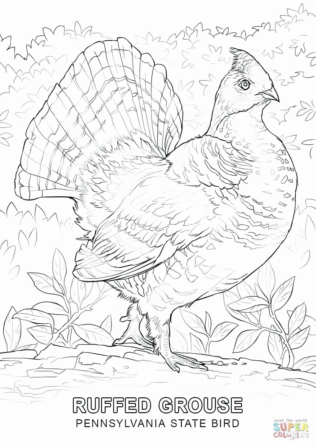 State Bird Coloring Page Inspirational New Jersey Coloring Page