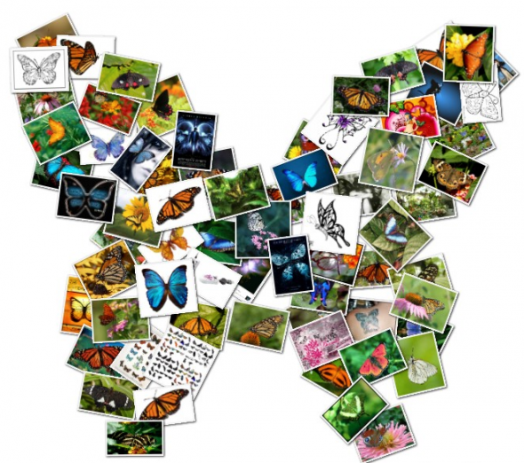 Butterfly collage made from butterfly pictures | flbutterfly