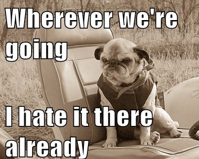 25 Hilarious Pug Memes Grumpy Dog Pugs Cute Pugs
