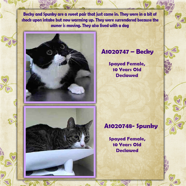 Sunny Safe 10 20 18 To Die 10 20 18 Cats Cat Adoption Foster Cat