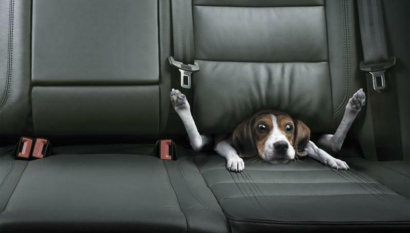 Dog stuck in car seat i dont know where i got this but i