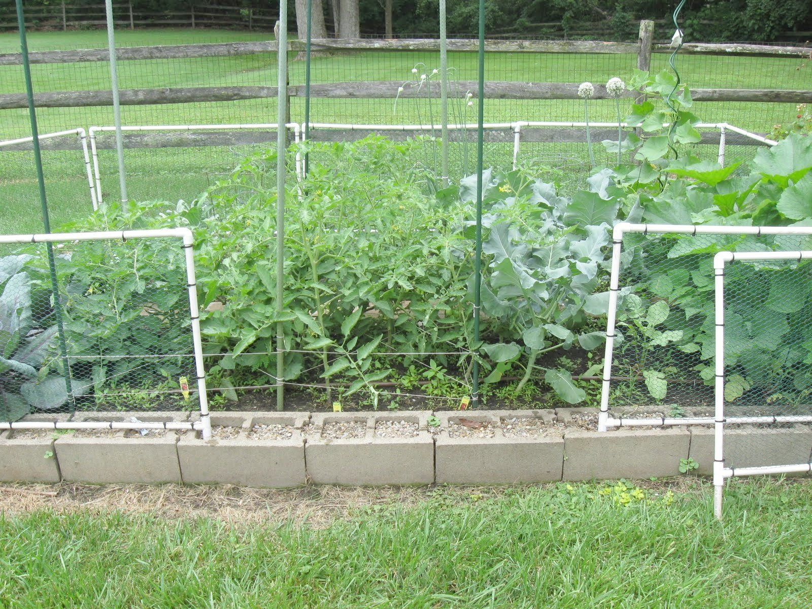 Superb Removable Garden Fence Chicken Wire Fence Ideas Fence