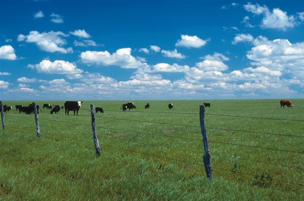 Types of Fences for the Homestead - Homesteading and Livestock