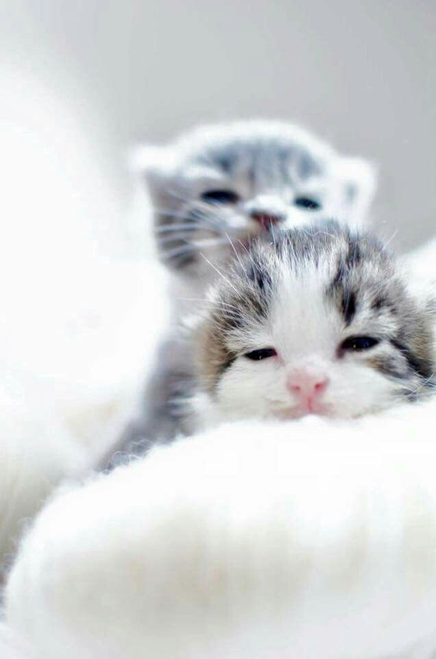Kittens Cute Animals Baby Cats Kittens Cutest