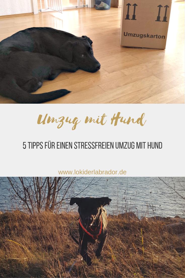 5 Tipps Fur Einen Stressfreien Umzug Mit Hund Hunde Tiere Hund Umzug