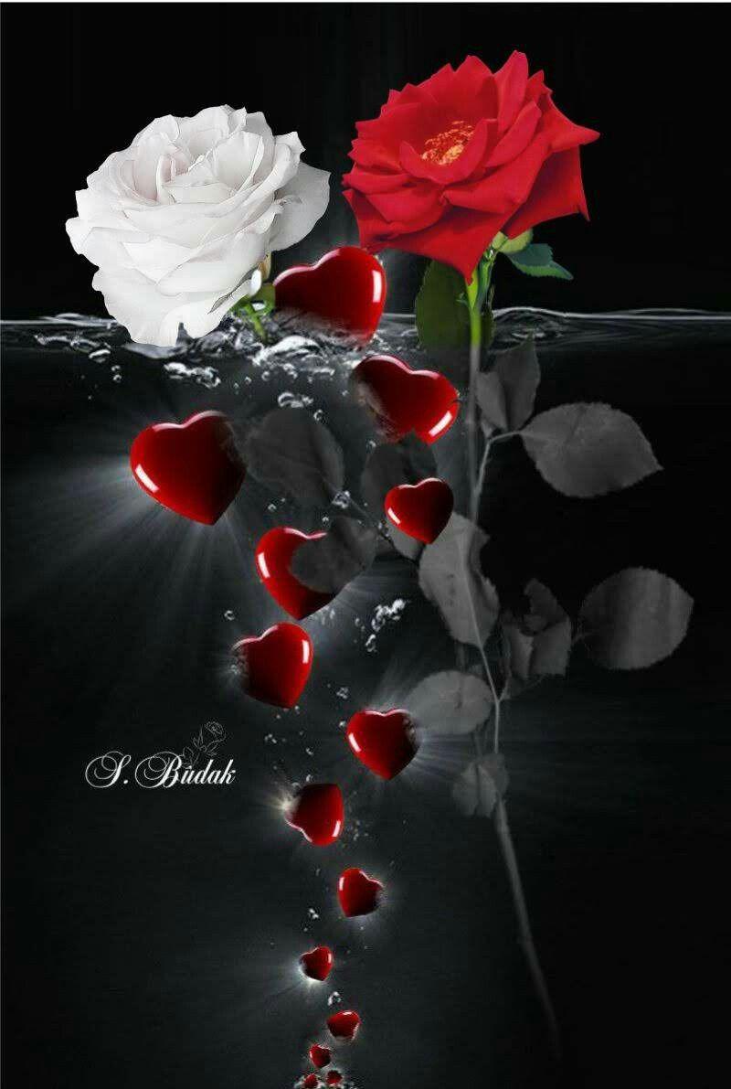 Pin By Samantha Yanko On Love Hurt Confusion Beautiful Flowers Beautiful Roses Very Beautiful Flowers