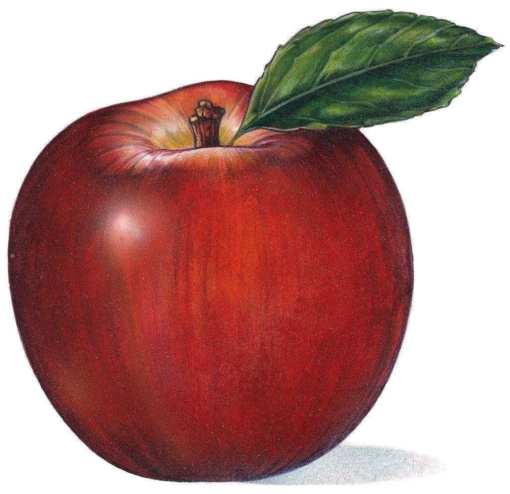 Анимашки яблоки на прозрачном фоне