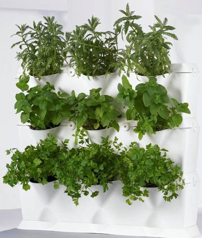 Huerto de hierbas arom ticas en la cocina herbs gardens - Plantas aromaticas en la cocina ...