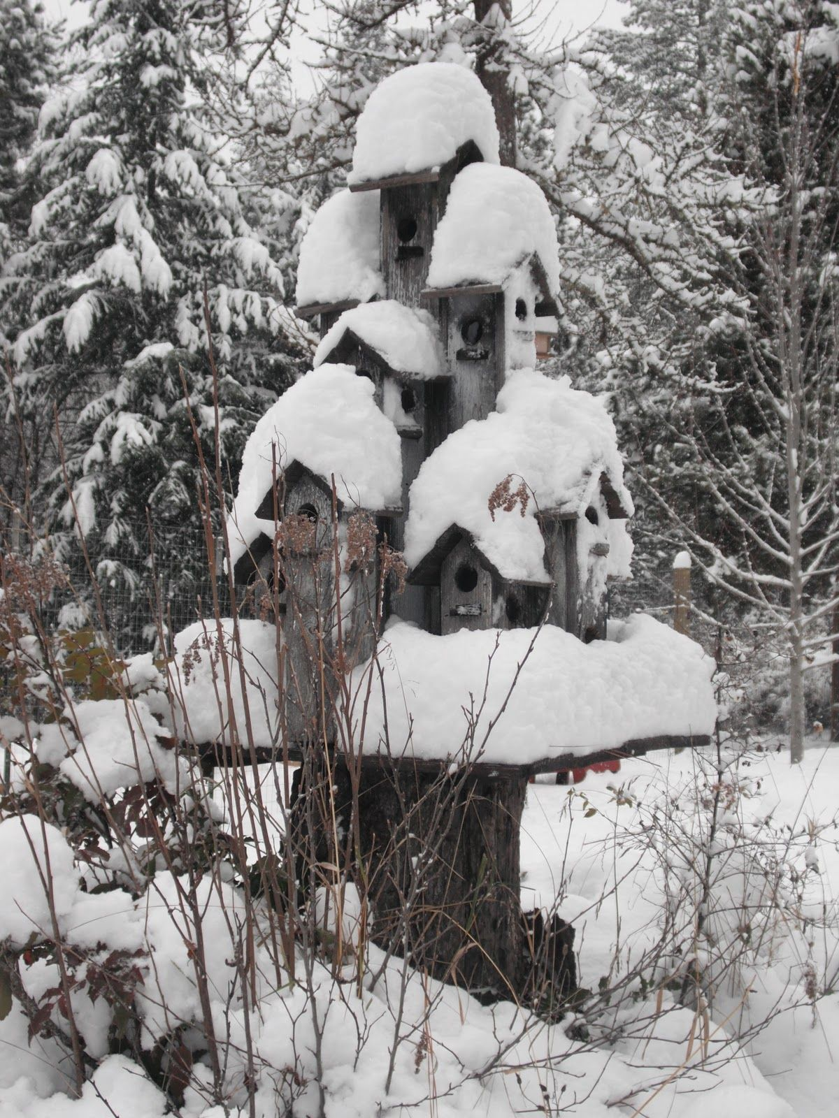 clustered bird houses on an old tree stump gardening birds