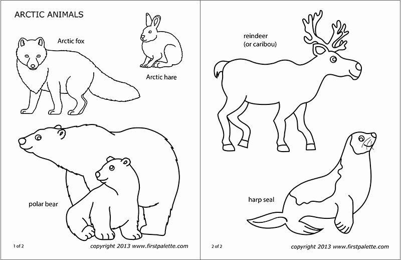 28 Arctic Fox Coloring Page In 2020 Arctic Animals Polar Animals