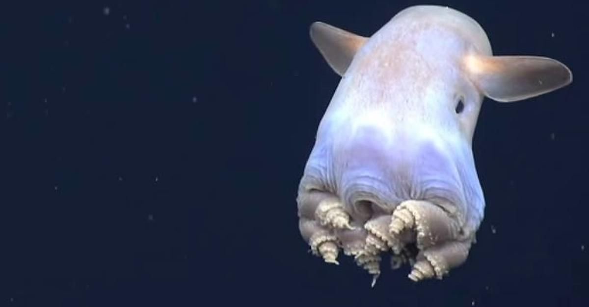 Focus.de - Wissenschaftler im Livestream: Kreaturen der Finsternis: Diese Tiefsee-Monster haben selbst Forscher noch nie gesehen - Video - Videos