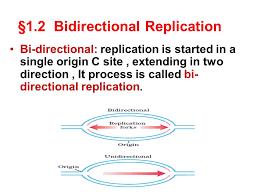 Image Result For Bidirectional Replication Single Origin Genetics Directions