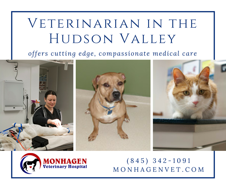 Monhagen Veterinary Hospital Provides The Compassionate And Best Medical Care To Your Pets If You Are Looking For Pet V Pet Vet Veterinary Hospital Pet Health