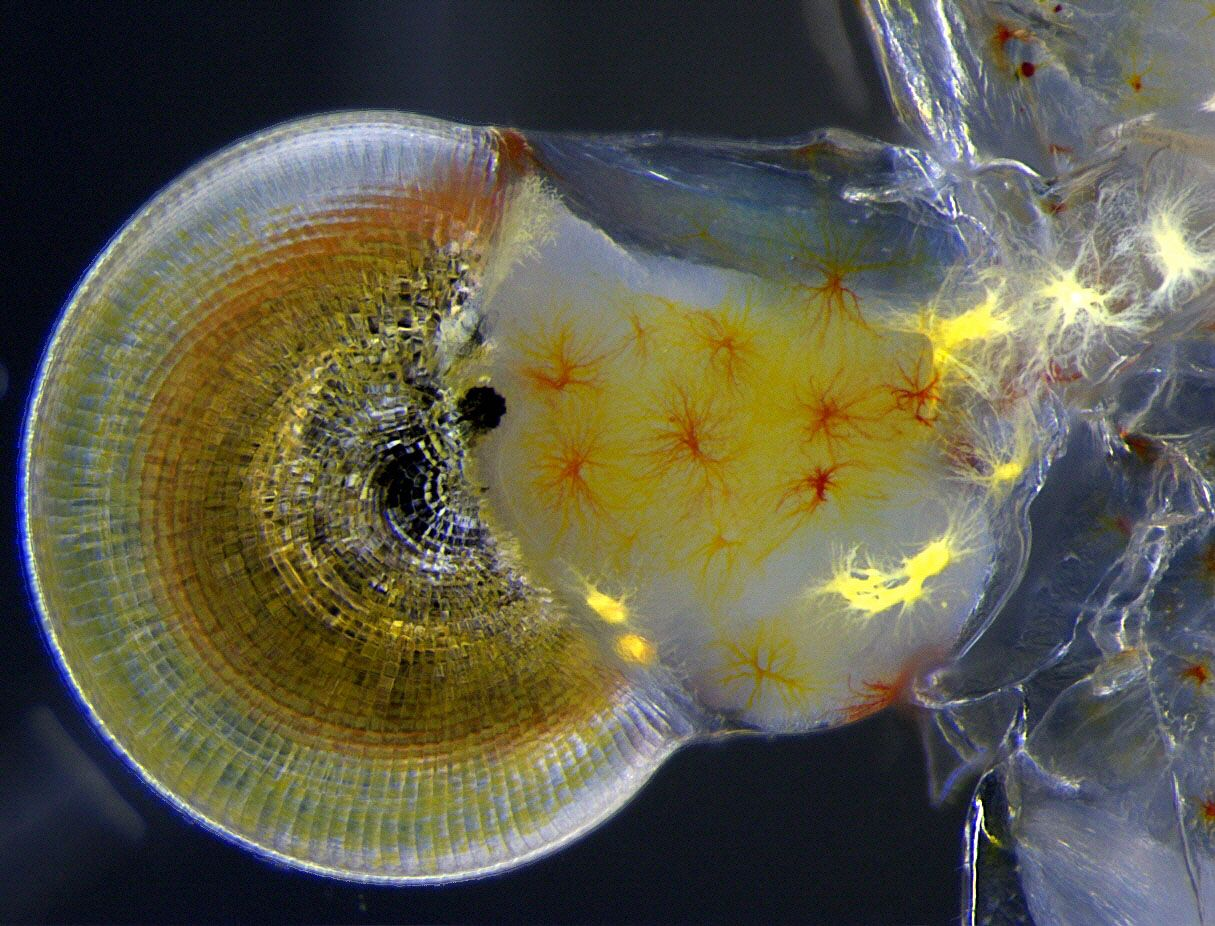Best Microscope Photos of the Year Bring Tiny, Amazing Worlds to Light