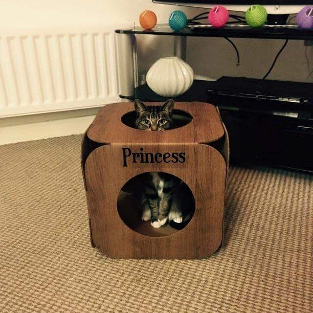 Awwwww! What an adorable photo of Princess!  she is so pretty  we are so happy she likes it  #cat #catsofinstagram #catstagram #catsagram #cats_of_instagram #catfurnature #catfurniture #catsinboxes #cattoy #INSTACAT_MEOWS #cutecat #PurrMachine #catsinboxes #catbox #Excellent_Cats #BestMeow #dailykittymail #thecatniptimes #frontpet #catcube #catpod #woodeffect #whiteandgold #ArchNemesis #FlyingArchNemesis @cats_lyf