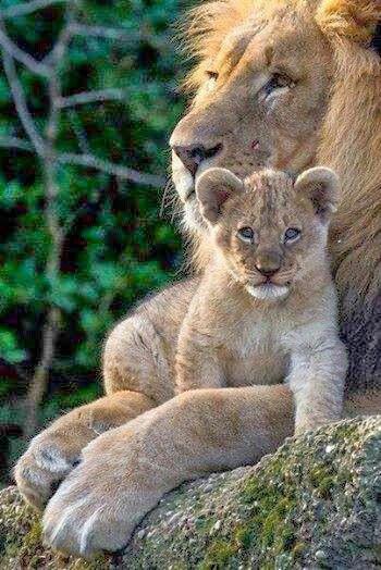 Tigres-leones-felinos.....