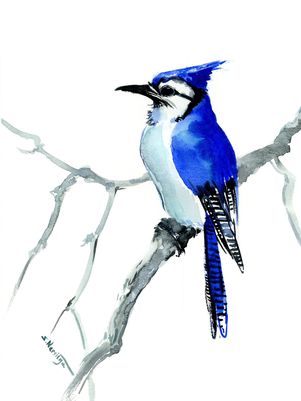 Blue Jay Art Original Watercolor Bird Painting Etsy Blue Jay Art Watercolor Bird Blue Jay