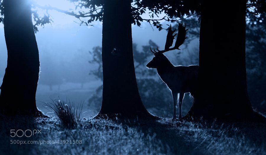 21 Delightful Deer Images #fondecranhiver