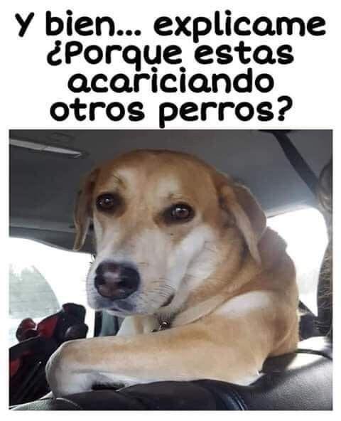 Pin De Adriana Chupina Arias En Memes Memes De Perros Chistosos Memes Divertidos Memes De Risa