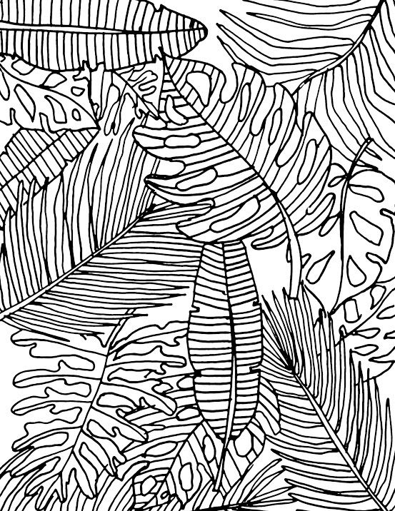 Displaying Tropical Leaves Coloring Page Jpg Leaf Coloring Page