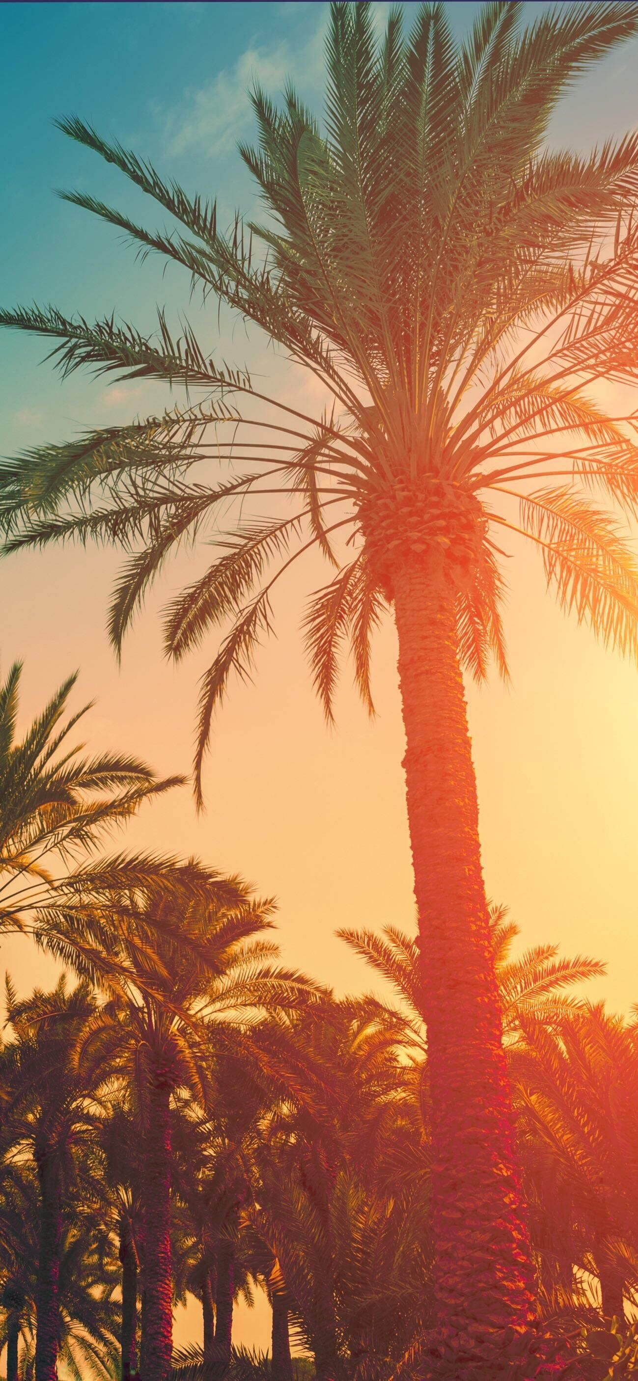 Palm Trees Iphone Wallpapers Iphonewallpaper4k