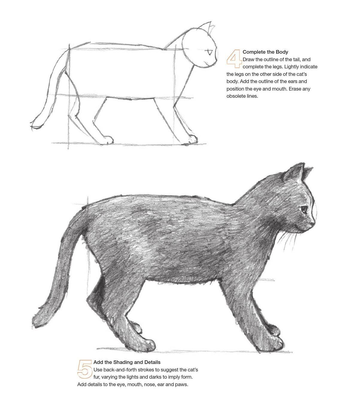 Drawing for the absolute beginner a clear easy guide to