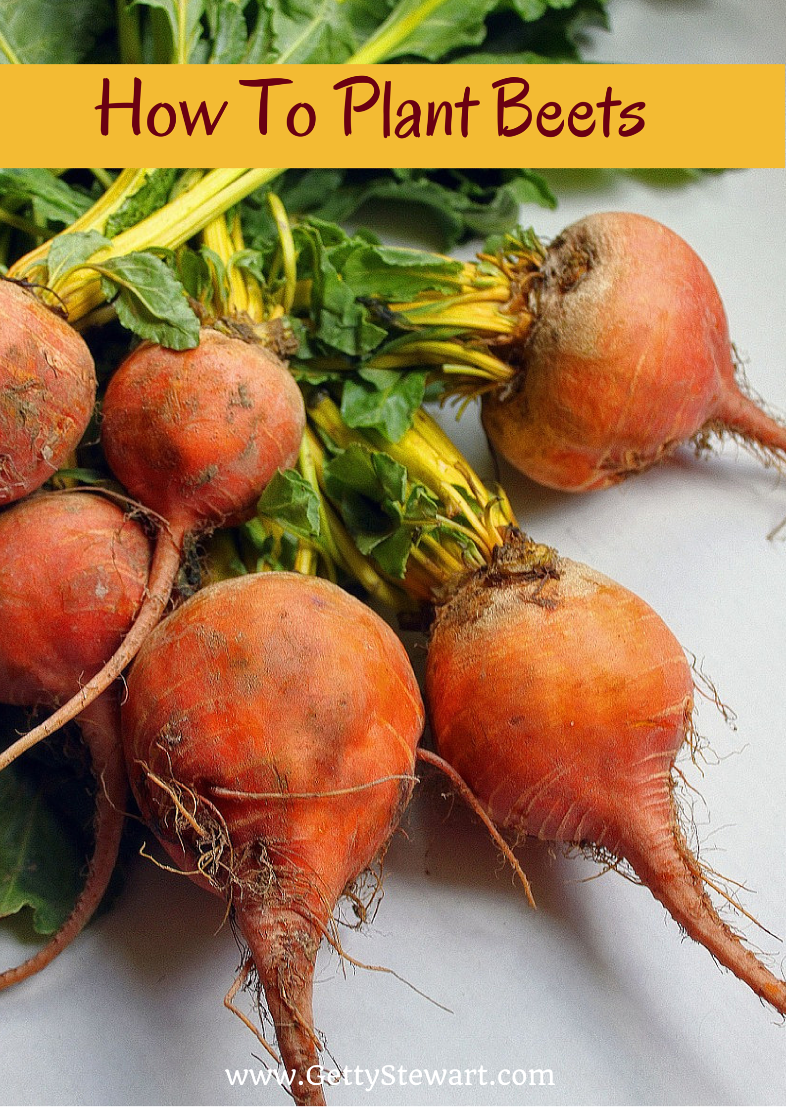 Getty Stewart How To Plant Beets In The Garden Growing Beets Vegetable Seed Organic Vegetables