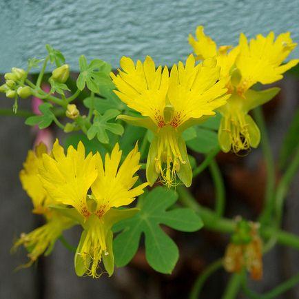Tips : Les plantes à fleurs jaunes   Planter des fleurs ...